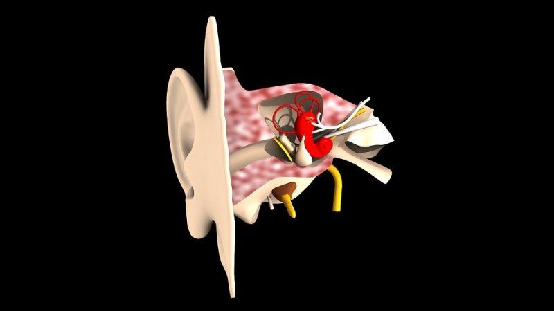 ¿Cómo curar la membrana del oído?