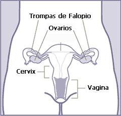 ¿Qué es un quiste funcional en el ovario?