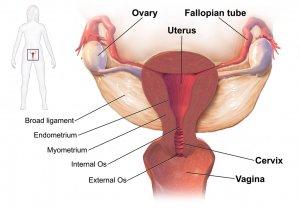 ¿Cuáles son los tipos de quistes en los ovarios?