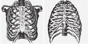 ¿Qué es una fisura en la costilla y cómo tratarla?