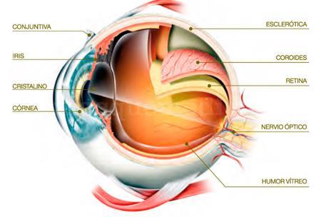 Unidad de retina y vitreo - Innova Ocular Virgen de Luján