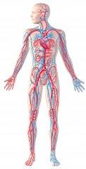 SIstema circulatorio y linfático - Clínica Lucq