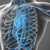 Vascular  El diagnóstico especializado del sistema vascular - Gnostika Imágenes Diagnósticas